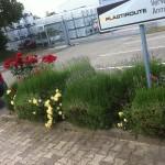 Das Aushängeschild Ihres Gebäudes schlechthin! Gemeinsam mit unserem Landwirtschaftlichem Personal betreuen wir gerne auch Ihren Garten
