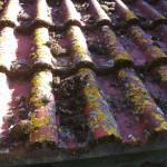 Für viele leider ein altbekanntes Bild. Doch das muss nicht sein! Kontaktieren Sie uns und ihr Dach wird kaum wieder zuerkennen.